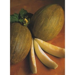 Valencia Early Rochet Melon