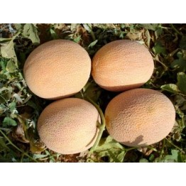 Ananas Melon