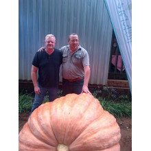 Giant Pumpkin Competition Commercial Seed