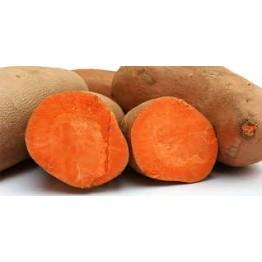 Bophelo Sweet Potato Runners