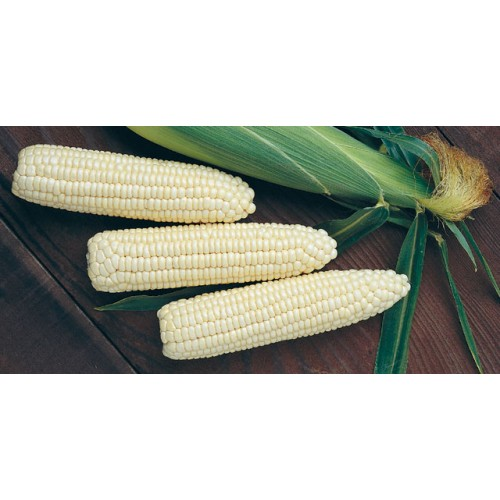 Border King Maize