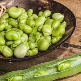 Robin Hood Broad Beans