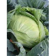 Cabbage Brunswick