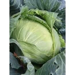 Cabbage Brunswick