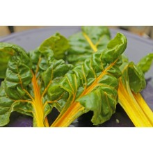 Canary Yellow Swiss Chard