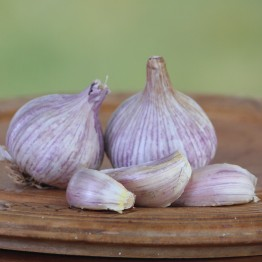 Heirloom Garlic Chesnok Red 200