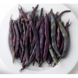 Cosse Violette Pole Bean