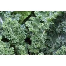 Dwarf Siberian Kale