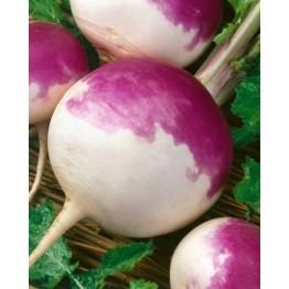 Purple Top White Globe