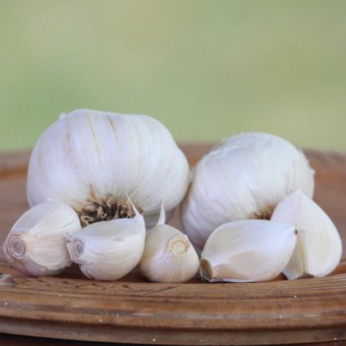 Heirloom Garlic Eastern Porcelain