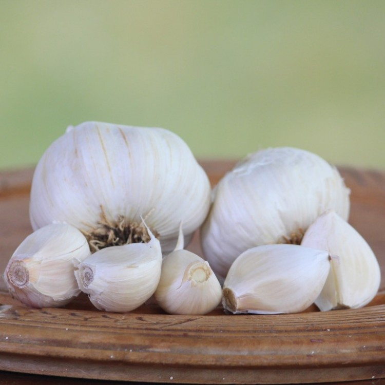 Heirloom Garlic Eastern Porcelain 1000
