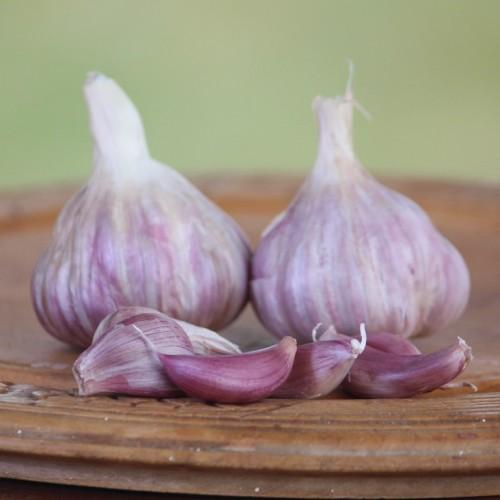 Egyptian Pink Garlic 1000