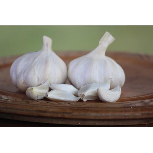 Egyptian White Garlic 1000's