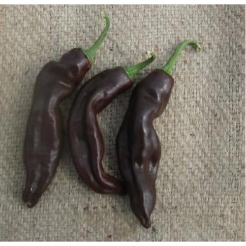 Ethiopian Brown Chilli