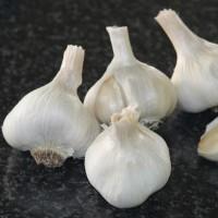 Heirloom Garlic Gaya's Joy
