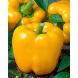 Golden California Wonder Sweet Pepper