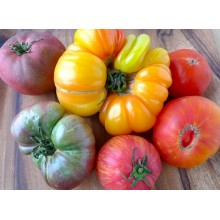 Giant Tomato Combo