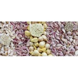 Heirloom Garlic Sampler