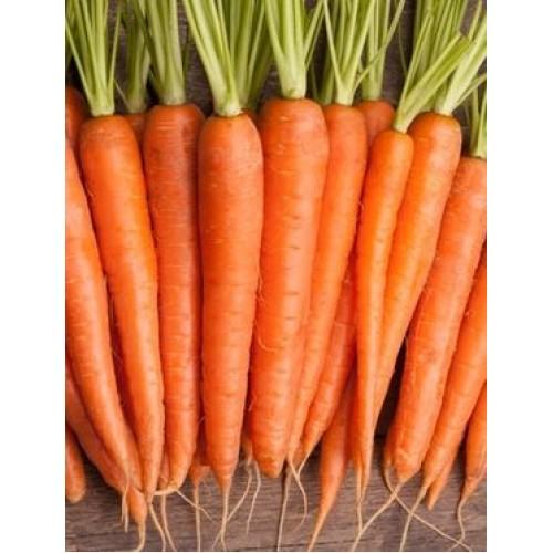 Kuroda Long Carrot