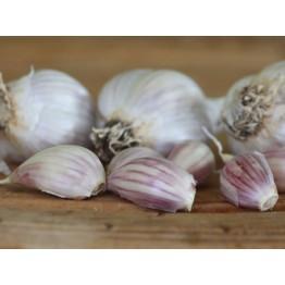 Heirloom Garlic Leningrad