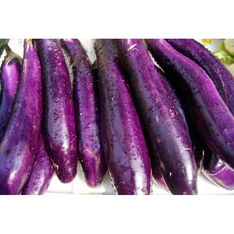 Long Purple Brinjal