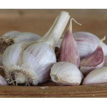 Heirloom Garlic Music