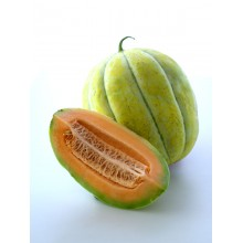 Navajo Yellow Melon