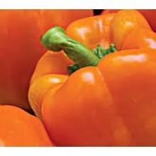 Orange Sun Sweet Pepper
