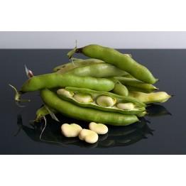 Peruvian Emerald Broad Beans