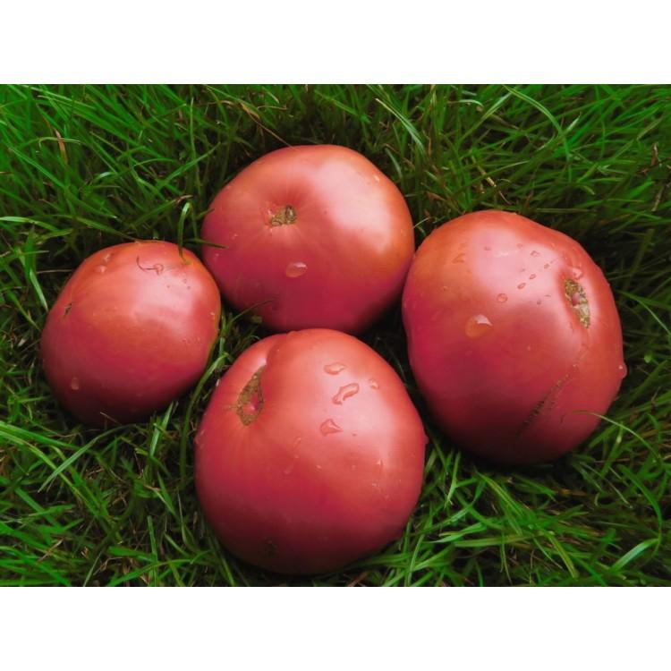 Rozova Magiya Tomato
