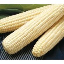 Southern Cross Corn