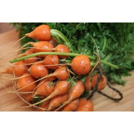 Thumbelina Carrot