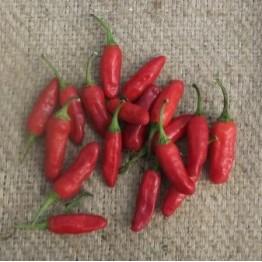 Trinidad Bush Chilli