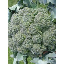 Waltham Broccoli