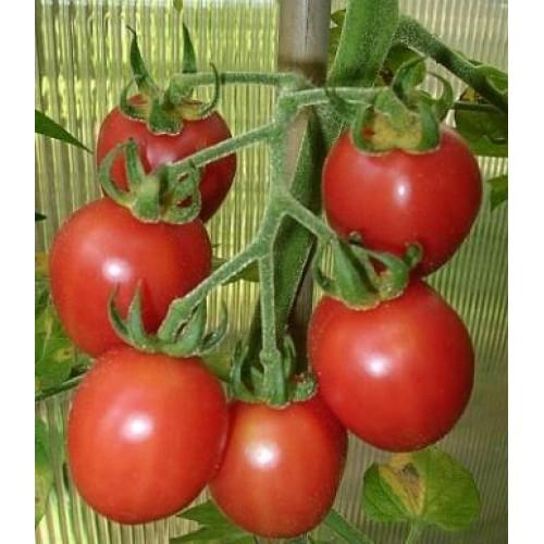 Amish Salad Tomato