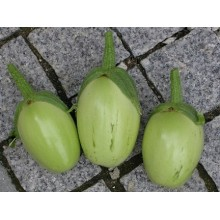 Seedling Applegreen Eggplant