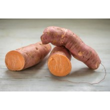 Beauregard Sweet Potato Runners