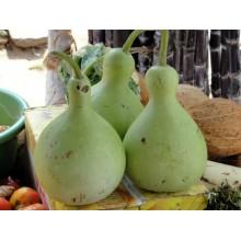 Calabash Birdhouse Gourd