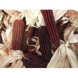 Bloody Butcher Corn