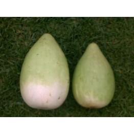 African Calabash Gourd