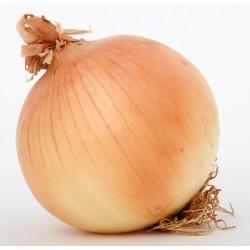Caprico Onion