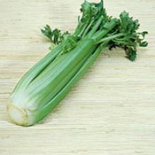 Giant Pascal Celery