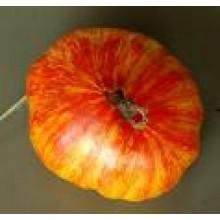 Seedling Copia Tomato