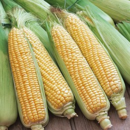 Golden Bantam Sweetcorn