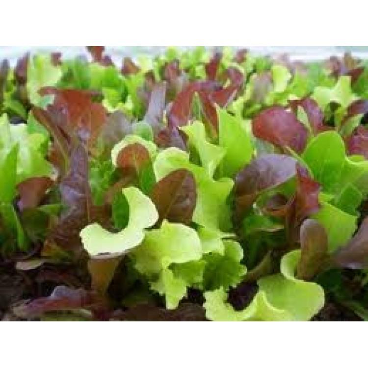 Lettuce Gourmet Mix