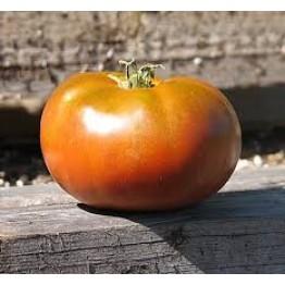 Grandma's Chocolate Dwarf Tomato