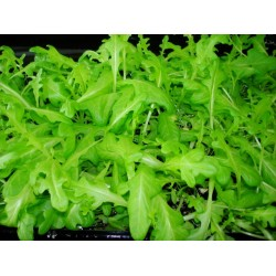 Oak Leaf Green