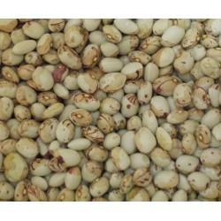 Half White Sugar Bean