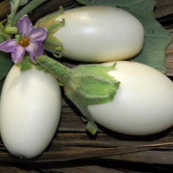 Japanese White Egg