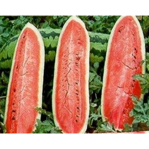 Jubilee Bush Watermelon